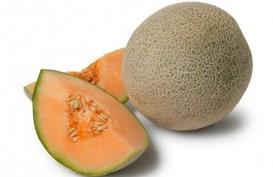 Rock Melon Australia Tercemar Listeria, Melon Indonesia Aman
