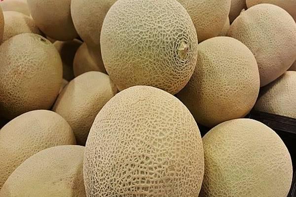 Rock Melon Austrlia - Istimewa