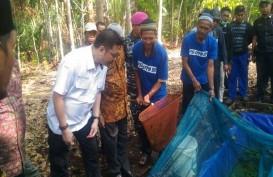 BRG Dorong Warga Meranti Budidaya Ikan di Air Gambut