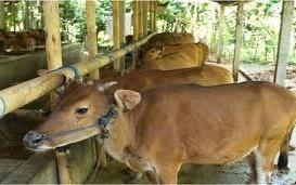 Bali Akan Kembangkan 56 Unit Sistem Pertanian Terintegrasi pada 2018