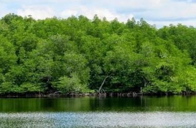 Pembersihan Sampah di Hutan Mangrove Muara Angke Ditarget Seminggu
