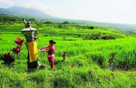 Perkembangan Agrowisata Sokong Kunjungan Wisatawan ke Bali