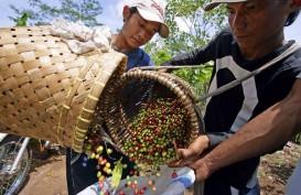 Produksi Robusta di Brasil Tinggi, Harga Kopi Tertekan