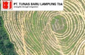 Laba Bersih Tunas Baru Lampung (TBLA) Mencapai Rp954 Miliar