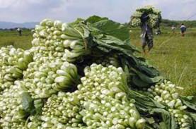 Bali Gagalkan Masuknya Benih Sayur Ilegal dari China