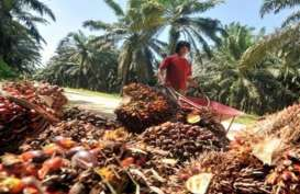 KELAPA SAWIT: Produsen Benih Perlu Jaminan Pasar