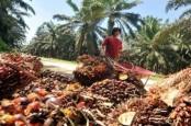 Masyarakat Riau Diminta Manfaatkan Peluang Ekspor Limbah Lidi Sawit