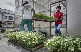 Pemkot Palembang Ajak Warga Tanam Cabai untuk Kendalikan Inflasi