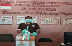 Karantina Nunukan Sita 105 Biji Benih Sawit Ilegal asal Malaysia