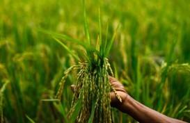 Peritel di Bali Berharap Petani Tingkatkan Produksi Beras Organik