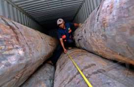 Polisi Papua Amankan 236 Batang Kayu Merbau