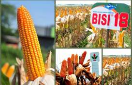 BISI Ekspor 900 ton Benih Hortikultura