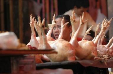 PINSAR: Produksi Daging Ayam Surplus, Impor GPS Harus Diatur