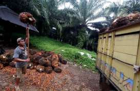 Kuartal I/2018, Produksi Minyak Kelapa Sawit ANJT Naik 14,82%