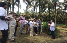 Perwakilan Uni Eropa dan Pemerintah Tinjau Kebun Kelapa Sawit Asian Agri