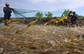 Tambak Udang di Sempadan Pantai di DIY Didorong Ditertibkan