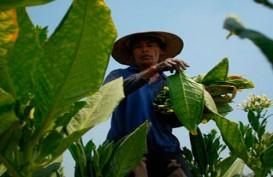 DBH: Cukai Hasil Tembakau di Sumsel Merosot