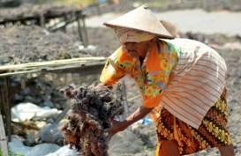 Suplai Karaginan Lokal Kurang, Produsen Okky Jelly Drink Terpaksa Impor