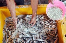 Inflasi Kalbar Sentuh 0,16%, Disumbang Ikan Kembung Asin