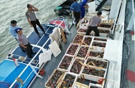 BKIPM Tarakan Gagalkan Pengiriman Kepiting Bertelur Ilegal Ke Malaysia