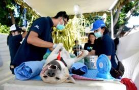 Denpasar Sterilisasi dan Kastrasi Anjing Liar di Kawasan Wisata