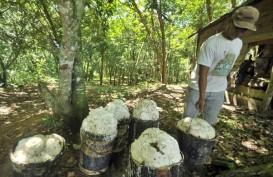 Perusahaan Perkebunan Didorong Gunakan Sekat Kanal Berbahan Baku Karet