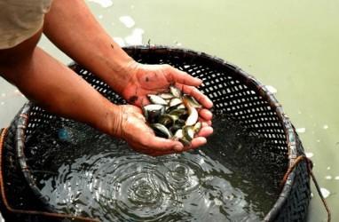 Boyolali Relokasi Balai Benih Ikan Karena Air Tercemar Limbah