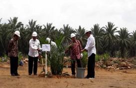 Dari Perkebunan Sawit, Ini Harapan Jokowi terhadap Industri CPO