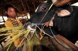 RASTER : Kala Peternak Sapi dan Petani Organik Bersinergi