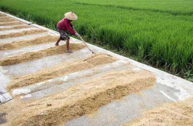 Impor Beras Tambahan Tak Pengaruhi Serapan Gabah