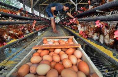 PASOKAN RAMADAN: Jateng Tekan Harga Telur & Daging Ayam