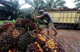 Indonesia Minta Argentina Pangkas Bea Produk Sawit & Kemudahan Visa