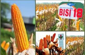 BISI Targetkan Produksi Jagung Jadi 35.000 ton Per Tahun