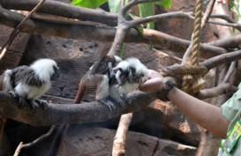 Lebaran, Taman Safari Prigen Targetkan Pengunjung Naik 20%