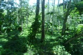 Di Objek Wisata Ini, Anda Bisa Nikmati Panorama Hutan…
