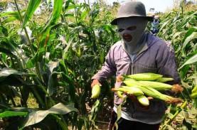 BPS: Upah Buruh Tani Meningkat 0,36%