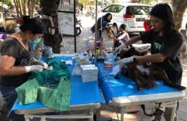 Denpasar Gencarkan Vaksinasi Hewan Pembawa Rabies