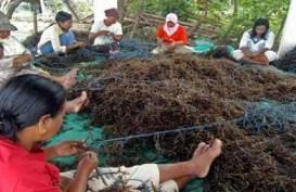 Mahasiswa Unair Olah Rumput Laut jadi Pengganti Gelatin dalam Es Krim