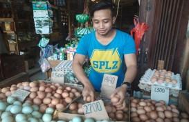 Harga Telur Ayam Ras Sentuh Level Tertinggi