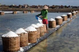 Musim Angin Optimalkan Produksi Garam Probolinggo