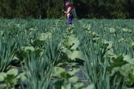 Kredit Pertanian di Jawa Timur Melambat