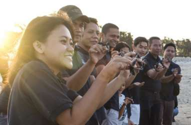 Ikut Lestarikan Penyu, Hotel Novotel Bali Lepas 25 Tukik
