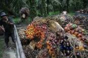 KABAR PASAR 24 JULI: Impor Agrikultura AS Dipermudah, Premium & Solar Tak Naik