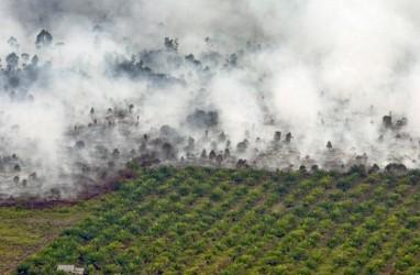 Jambi Bakal Cek Kesiapan Perusahaan Sawit Hadapi Kebakaran