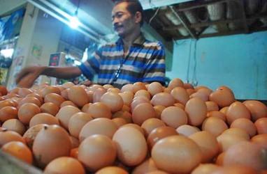 Harga Telur Mahal, KPPU Medan Endus Indikasi Kartel oleh Asosiasi