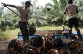 Petani Sawit Riau Ingin Penerapan Satu Harga