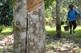 Kelangsungan Pertanian Karet Indonesia dalam Ancaman Besar