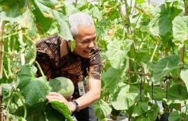 Ganjar Pranowo InginJateng Kembangkan Pertanian Berkelanjutan