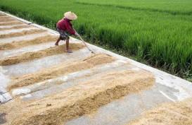 Produksi Terancam Puso, Harga Gabah Patut Diwaspadai