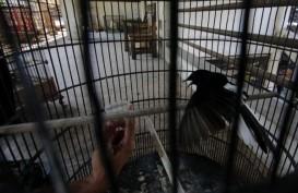 Pedagang Burung di Madiun Keberatan Aturan Menteri LHK